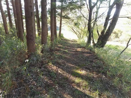 침엽수 림과 짐승도 산림