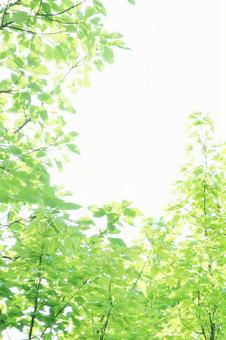 Sunbeams Background Background Material Glitter Green Shine Vertical