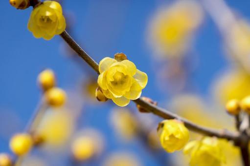 Rhubai Flower