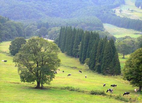 Cattle herd 4
