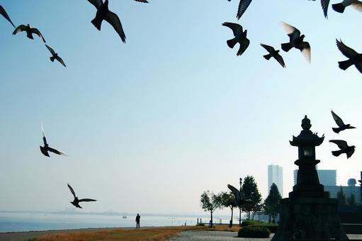 一群鴿子飛離琵琶湖岸邊清澈的藍天