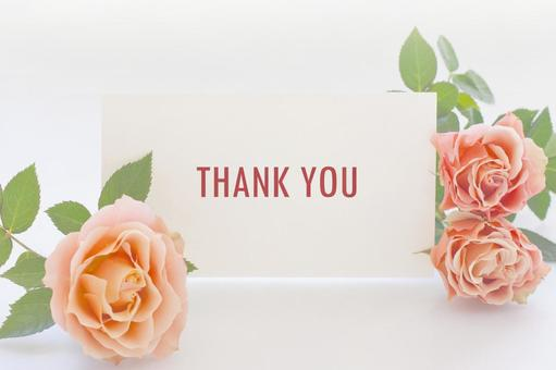 Rose flower and Thank you card