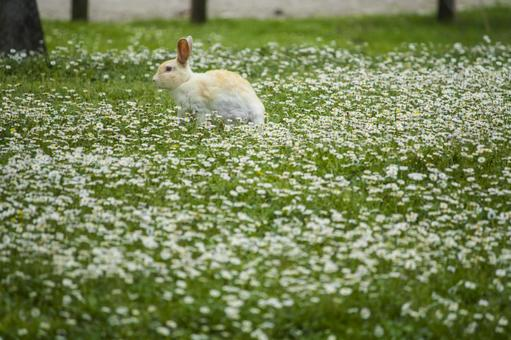 A rabbit in a flower garden