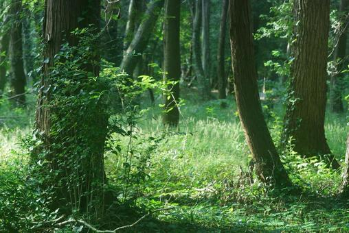 Trees_Forest_72