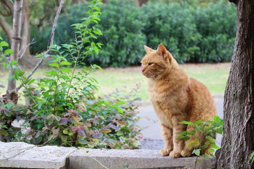 가로 도둑 고양이