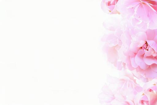 Beautiful flower frame 3