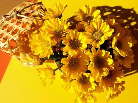 Yellow chrysanthemum ⑤