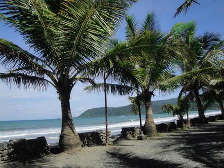 Philippine beaches and trees
