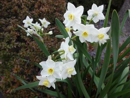 꽃 (흰색 -1)