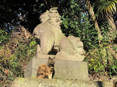 A cat basking in the sun next to a guardian dog