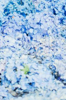 Hydrangea background material ②