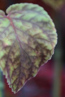 둥근 잎 1