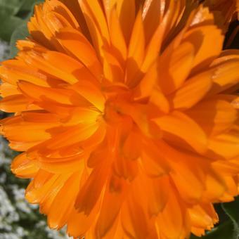 주황색 경사