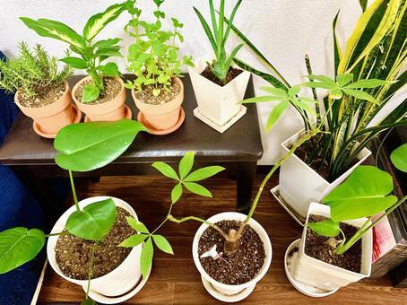 Houseplant 002