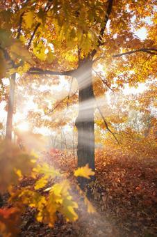 Autumn leaves tree 23