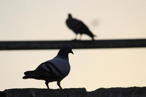Pakistan Bird 21