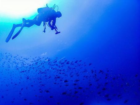 Underwater photography (diver)