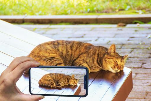 Cat Cat Smartphone Shooting Bench Smartphone Photo Video Sharing