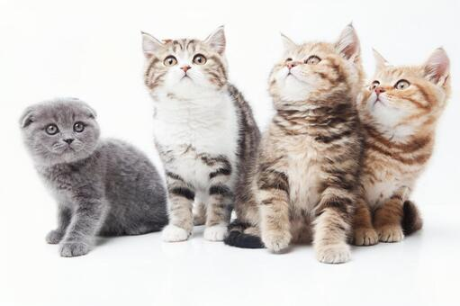 Four cats 6