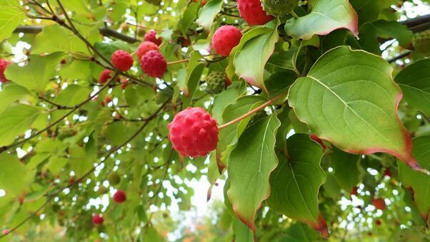 야마의 열매 2