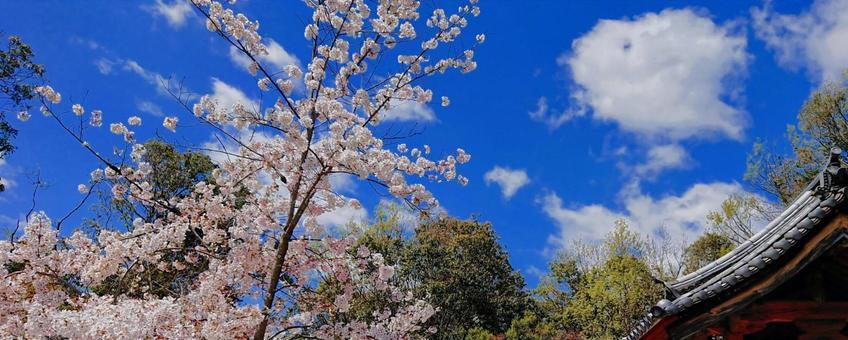 일본의 봄 풍경