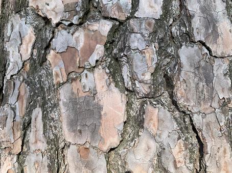소나무 피부