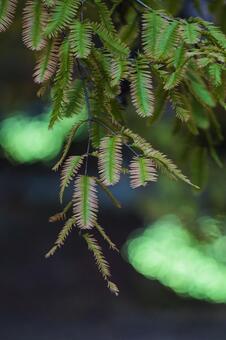 基於蕨類植物