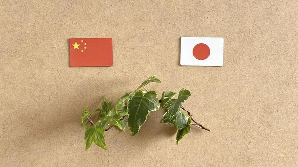 中日兩國國旗和常春藤