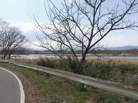 Abukuma River guardrail and dead tree