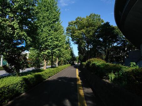 Shibuya Ward Sendagaya