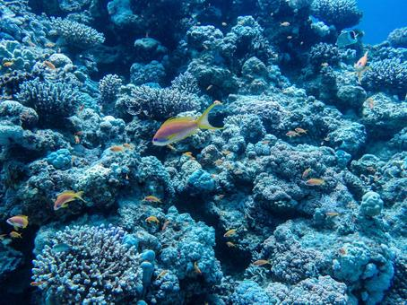 Coral reefs and schools of colorful fish