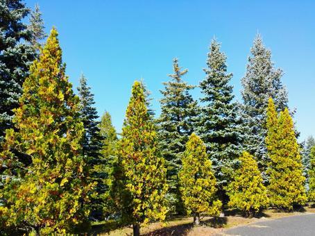 Tree background like a Christmas tree 1208