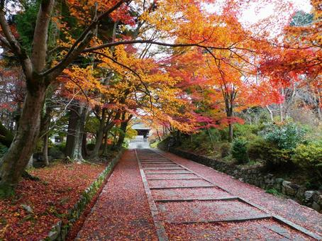 Autumn leaves of Kyoto Yamashina Bishamondo
