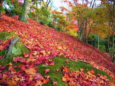 Jojakkoji Temple Autumn leaves in late autumn