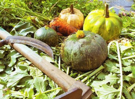 가을의 수확 호박 · 당근 ③