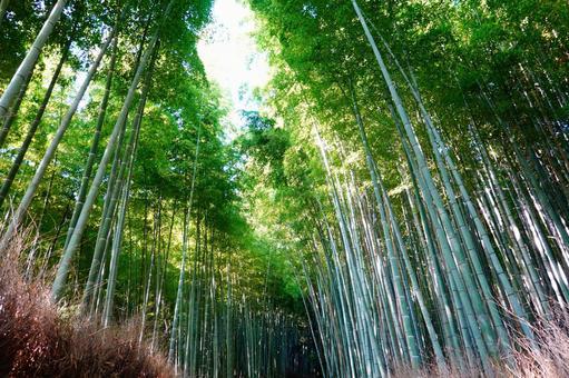 Kyoto Arashiyama Sagano A small-diameter landscape of a bamboo grove shining in the sun