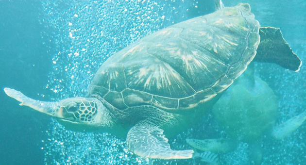 수영 바다 거북 수중
