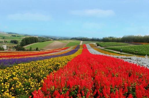 Flower field in Hokkaido (Shikisai no Oka)