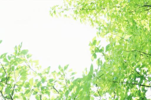 Sunbeams Komorebi Summer Early Summer Glitter
