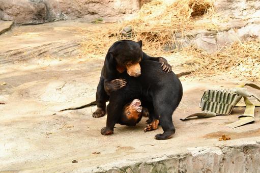 Zoo 22
