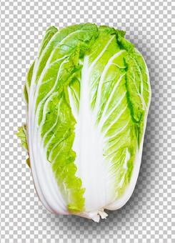 Chinese cabbage (shadows and background can be erased!) 0430