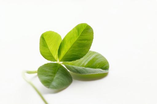 네 잎 클로버