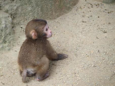 Child monkey