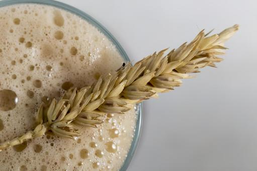 Wheat and beer 3