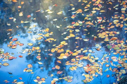落葉的水面1