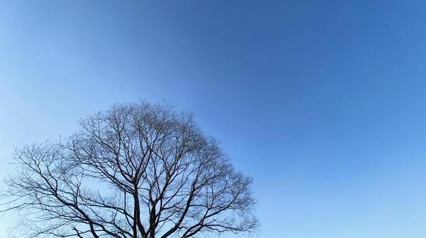 Dead tree silhouette and blue sky