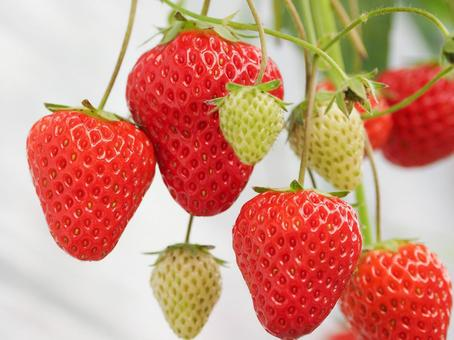 Strawberry picking image
