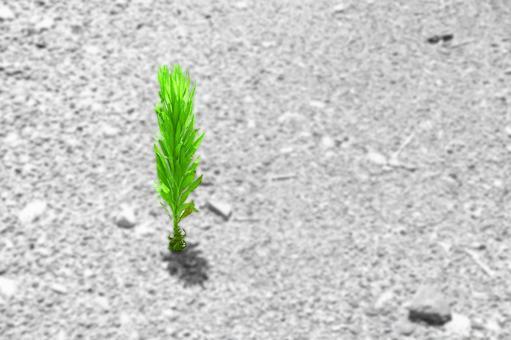Summer grass of dry ground # 3