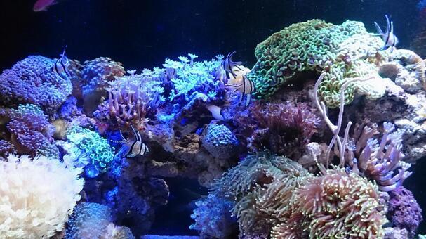 Art aquarium ⑦
