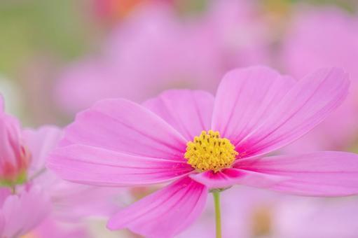 粉紅色的宇宙起來